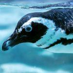 アイ・オー・データからペンギンがやって来た!